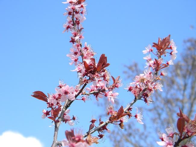 E' primavera! Bello camminare con gli alberi in fiore. Unica nota di colore su questi altipiani assolati.
